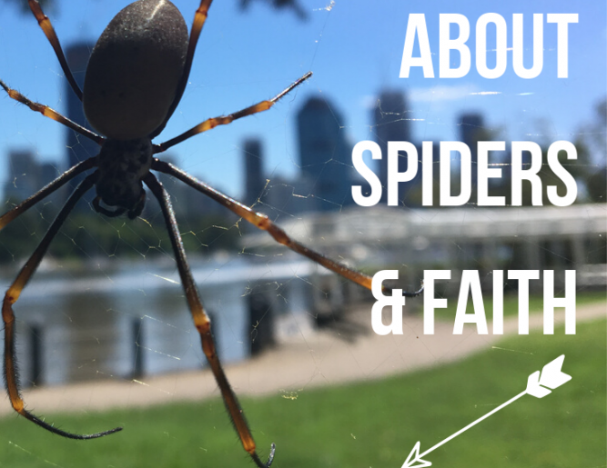 Spiders: A Creepy, Crawly Lesson Plan For Kids!